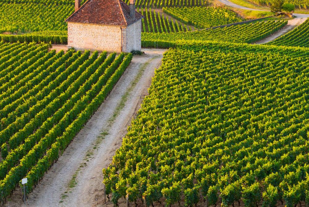 Vineyards, Bordeaux