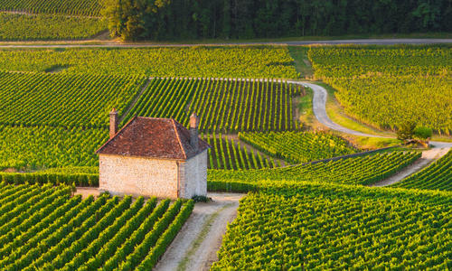 Vineyards, Bordeaux