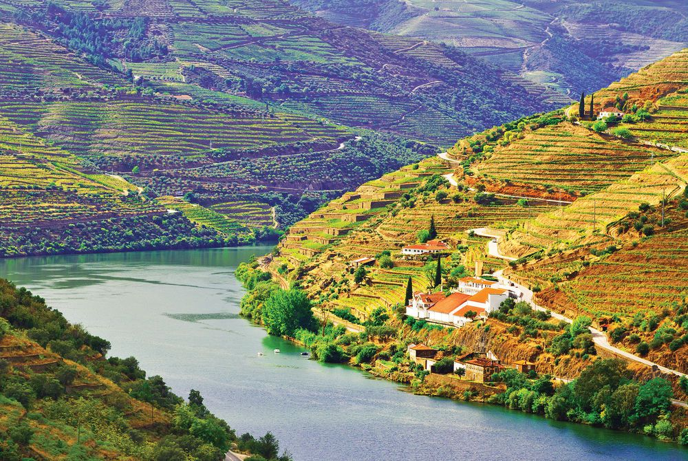 Vineyards, Douro River