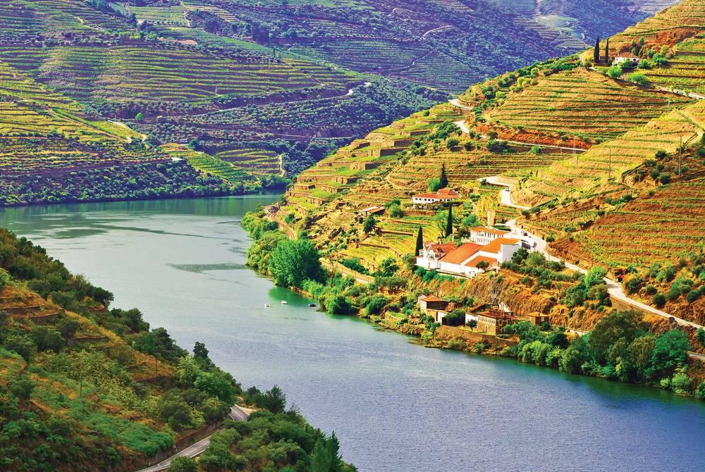 Vineyards, Douro River, Portugal