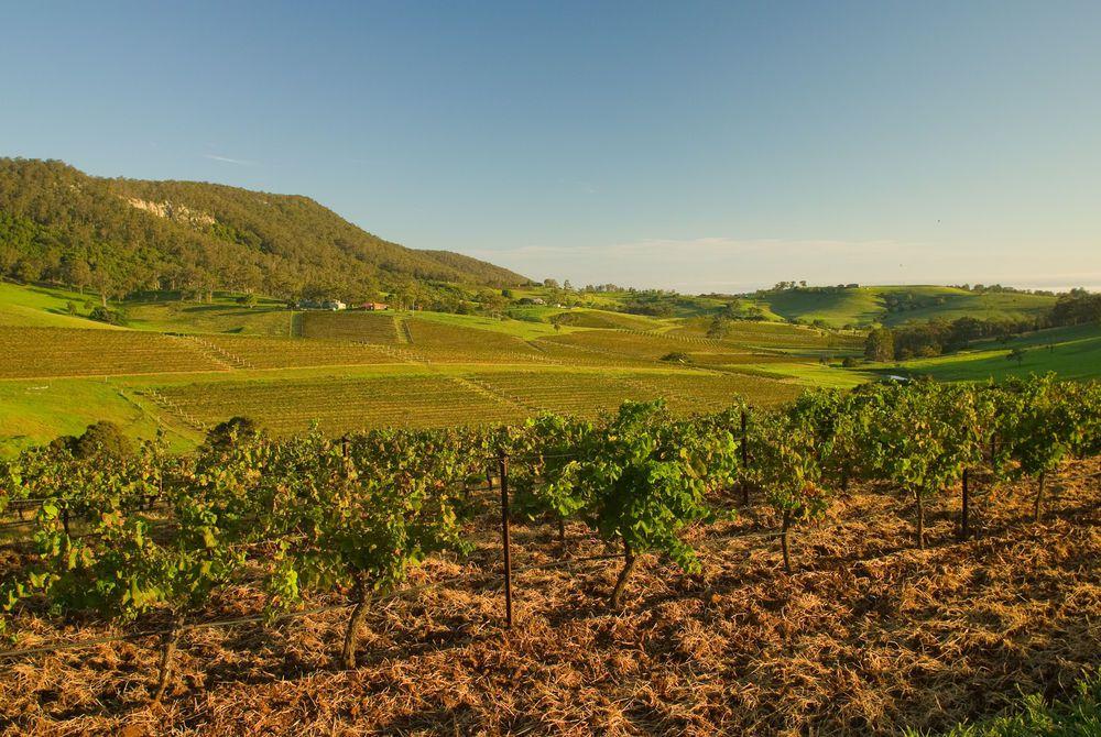 Vineyards, Hunter Valley, Australia