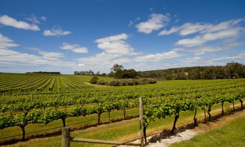 Vineyards, Margaret River Region