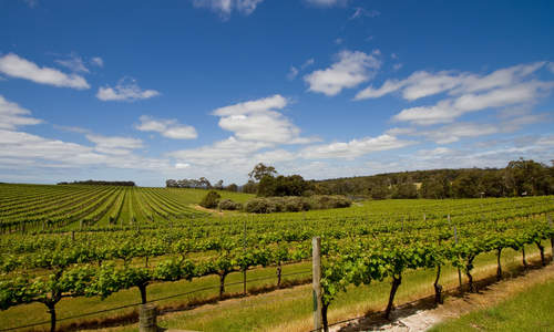 Vineyards, Margaret River