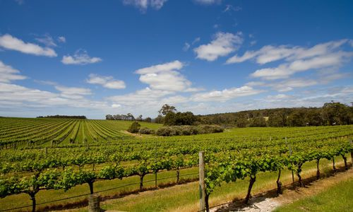 Vineyards, Margaret River, Australia