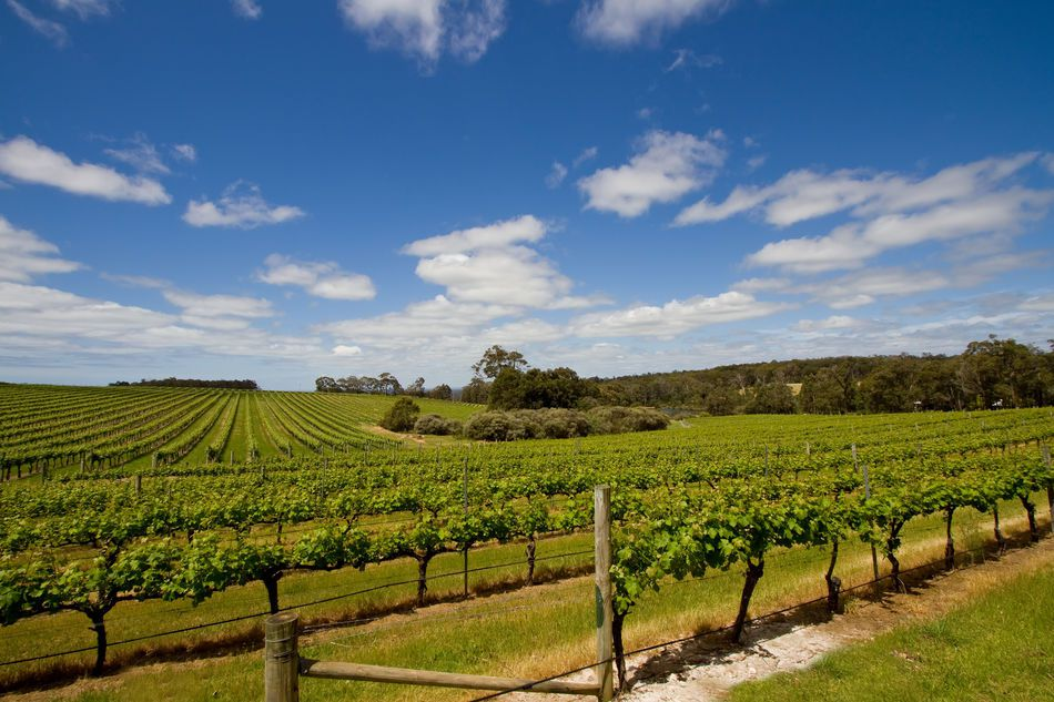The vineyards of Australia's Margaret River region
