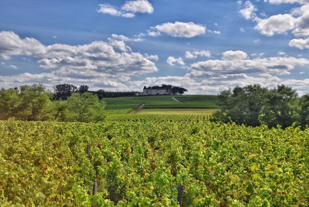 Vineyards in Bordeaux Region