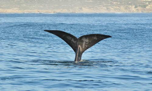 Walker Bay, Hermanus, South Africa