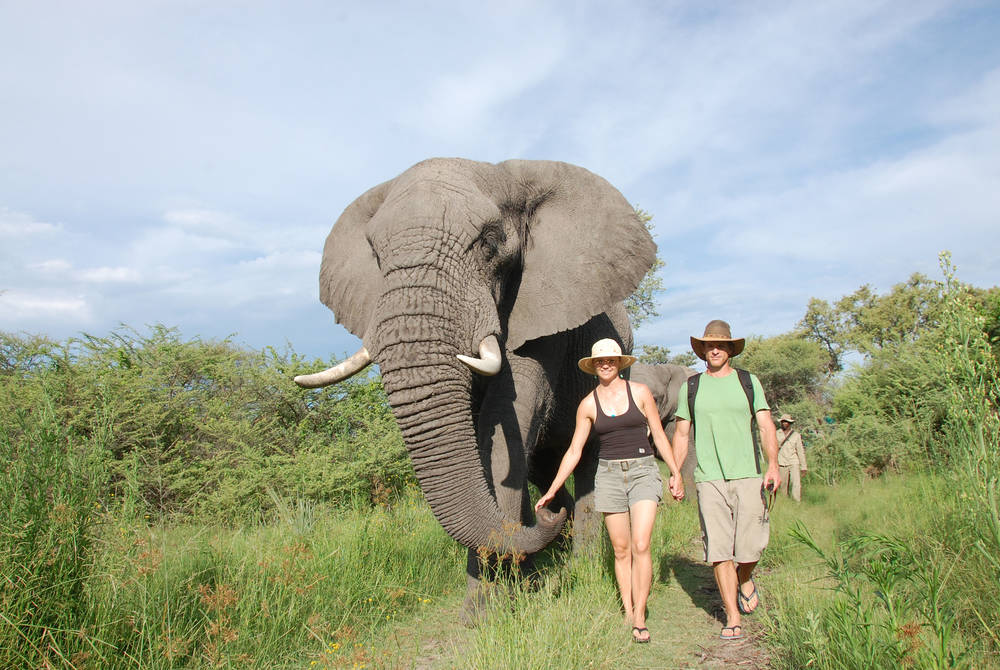 Walking with elephants at Sanctuary Baines' Camp, Botswana