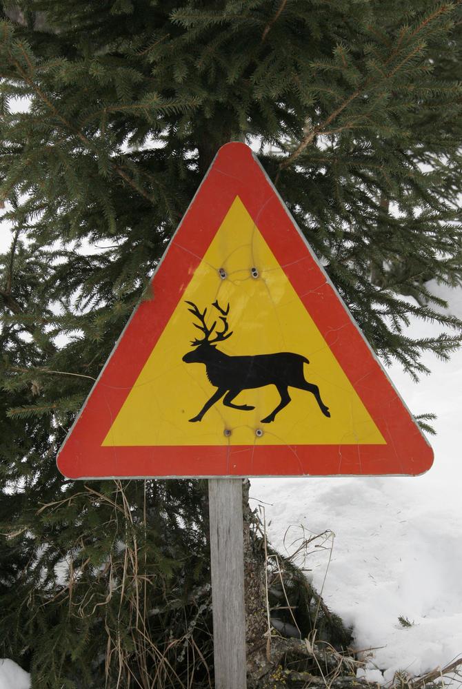 Watch out for reindeers! Rovaniemi (Credit: Visit Rovaniemi)