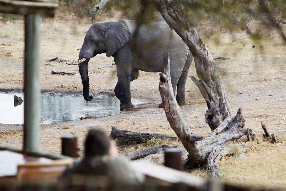 Watering hole, Savute Safari Lodge