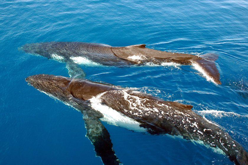 Whale Watching, Fraser Island, Queensland, Australia