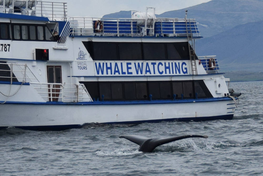 Whale watching ship in Iceland
