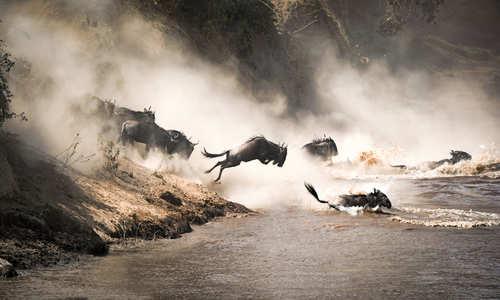 Wildebeest migration, Mara River