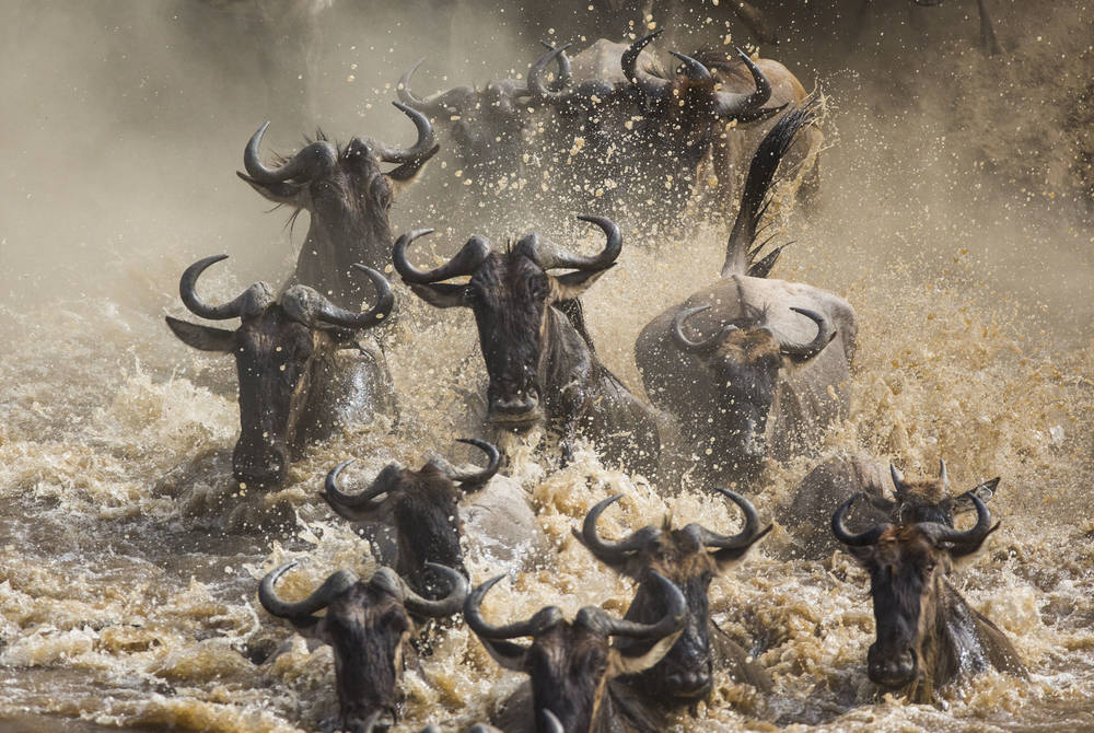 The Great Wildebeest Migration, the Serengeti