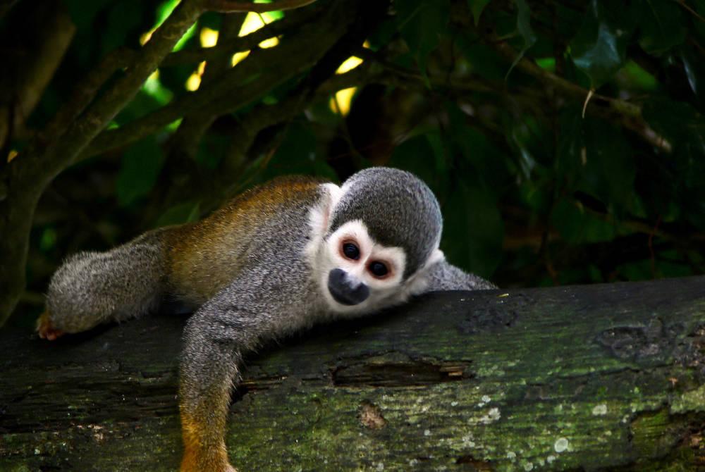 Wildlife, La Selva