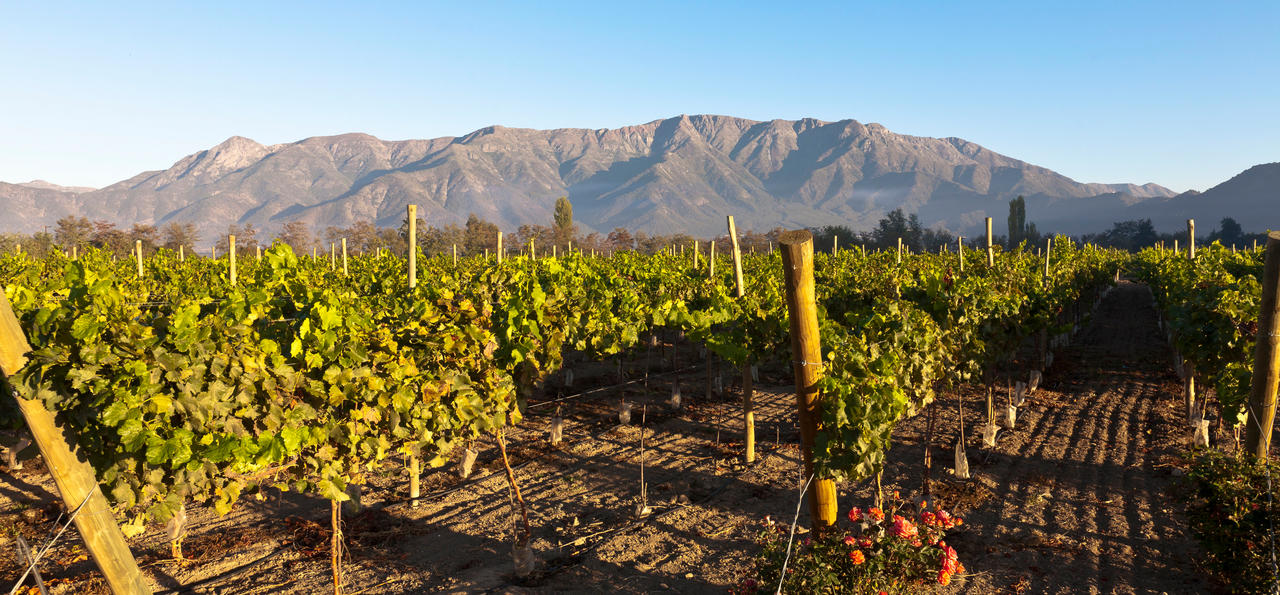 Wine valleys, Chile