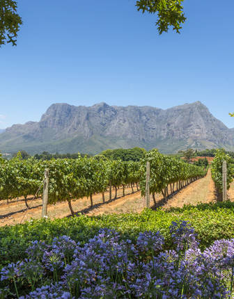 Winelands near Cape Town in South Africa