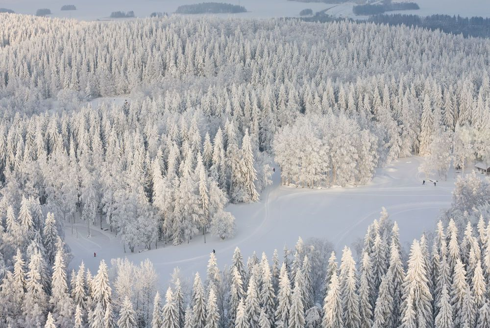Winter forest, Finland