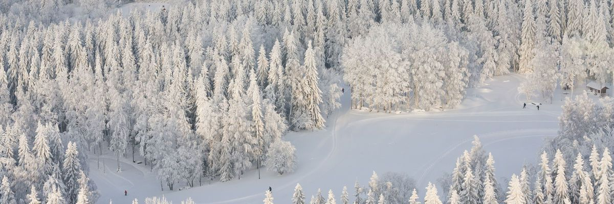 Winter forest with frosty trees and skiers, aerial view, Kuopio, Finland