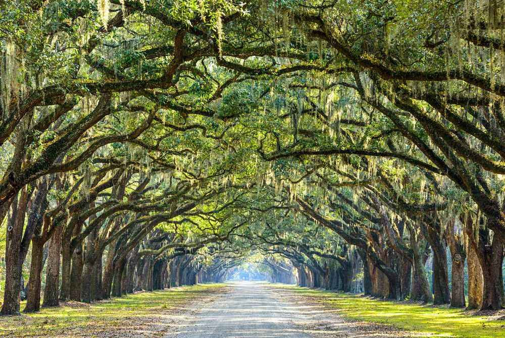 Wormsloe Plantation, Savannah