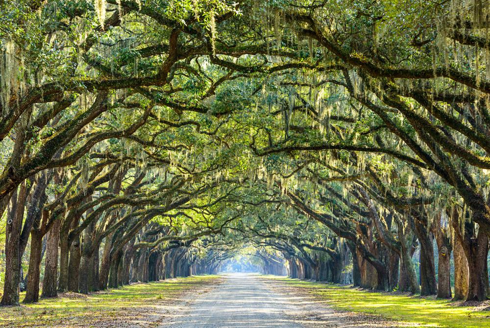 Wormsloe Plantation, Savannah