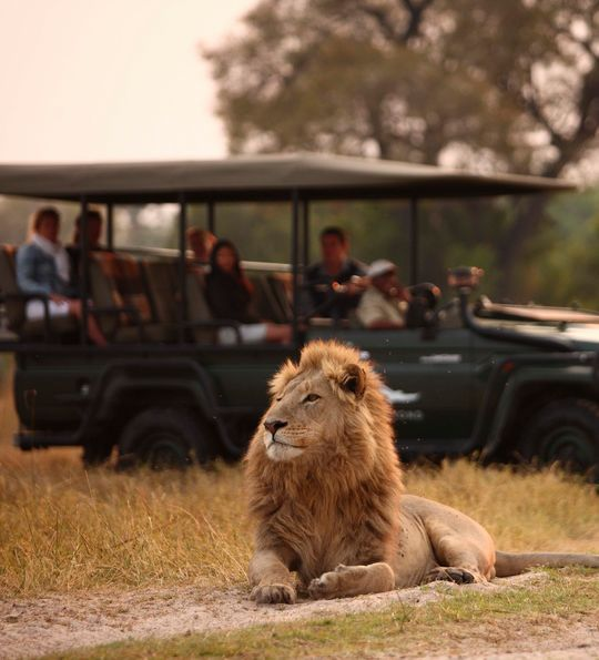 Lions in Moremi Game Reserve, Botswana