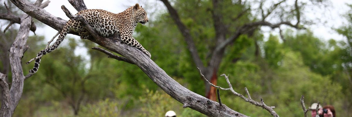 andBeyond Kirkman's Kamp, Sabi Sands Game Reserve, South Africa