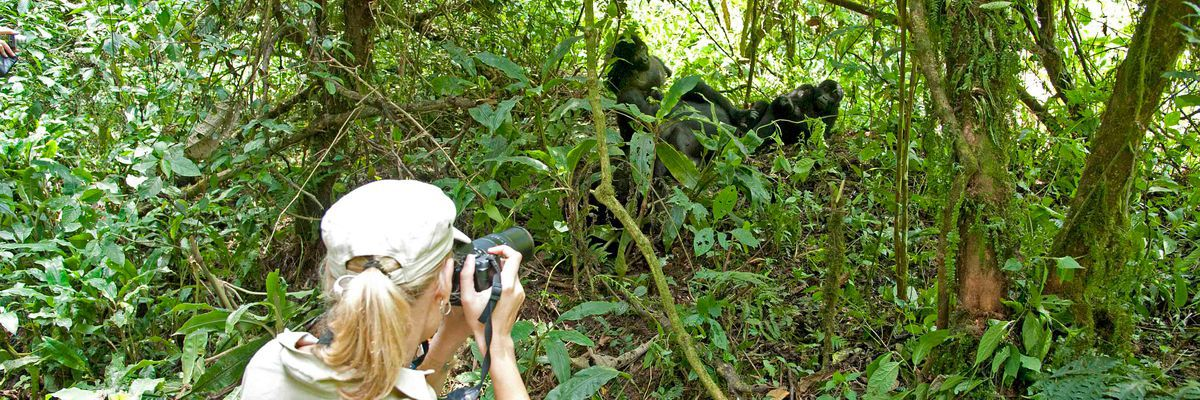 Gorilla viewing, Bwindi Forest