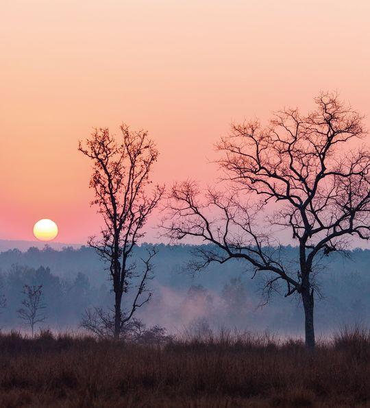 sunset at Kanha National Park, India