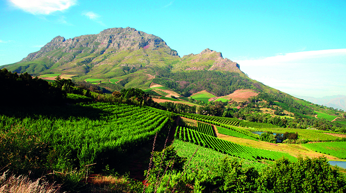 Wine Valley, South Africa