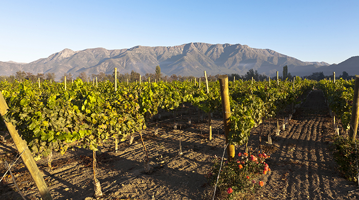 Wine Valley, Chile