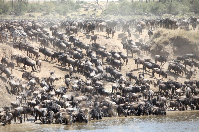 Great Migration, Kenya and Tanzania, Africa