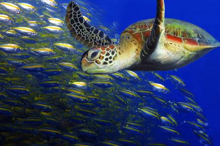 Malaysia Palau Sipadan dive site