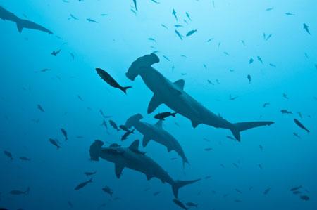 Costa Rica Cocos Island dive site