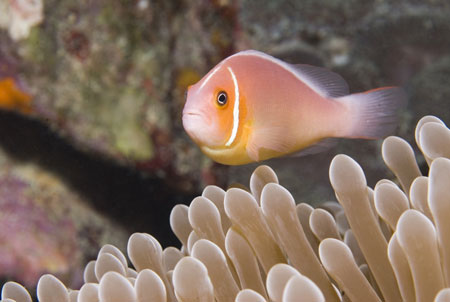 Micronesia Chuuk Lagoon dive site