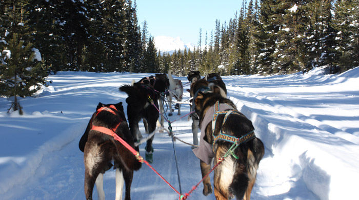 Husky safari, Banff National Park, Canada