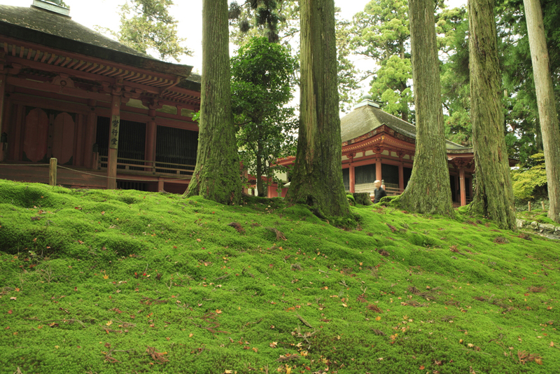 Kyoto 39 S Best Gardens Holiday Articles Luxury Tailor