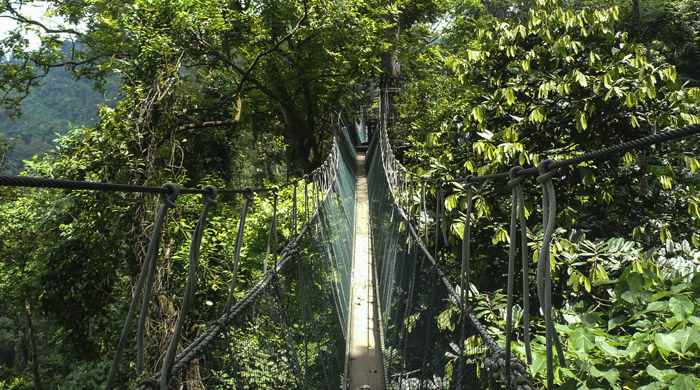 Canopy walkway, Taman Negara National Park