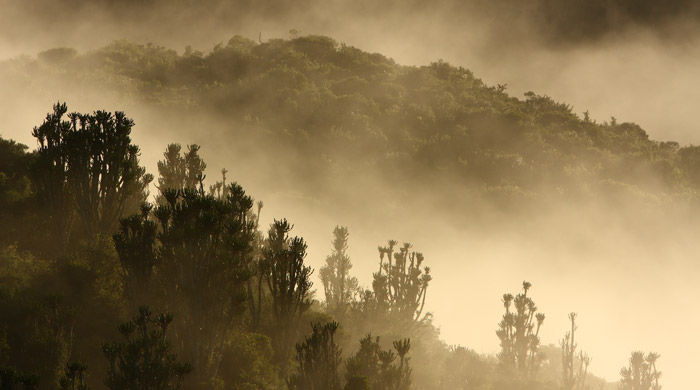Mist-shrouded valleys at Shamwari Game Reserve, South Africa