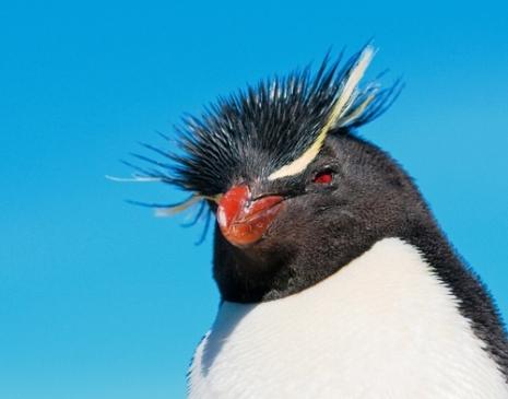 Seabourn Antarctica Cruise - Penguins