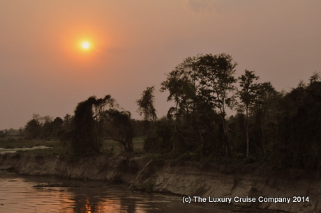 Jungle along the banks of the Brahmaputra River