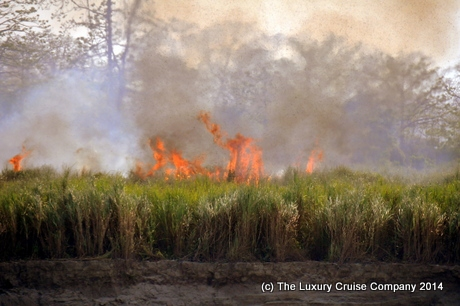 Jungle fire, Kaziranga National Park