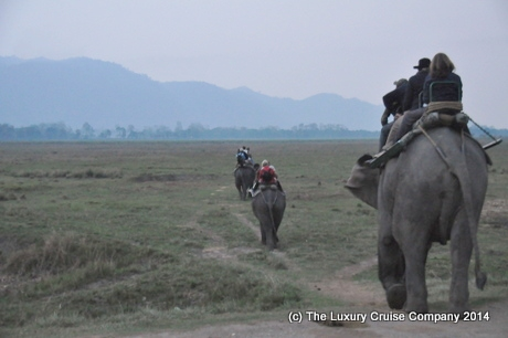 Elephant Safari, Kaziranga National Park