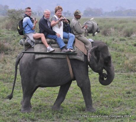 Elephant Safari, Kaziranga National Park