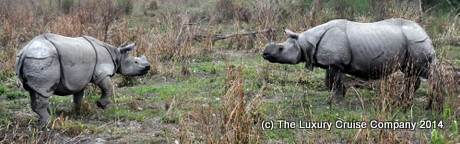 One Horned Rhinoceros, Kaziranga National Park