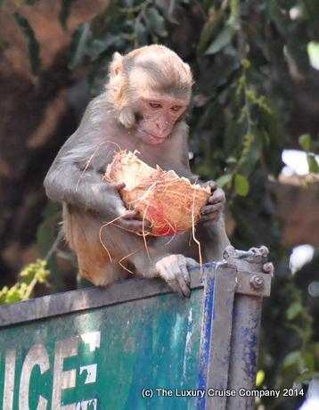 Monkey, Kamakhya Temple, Guwahati