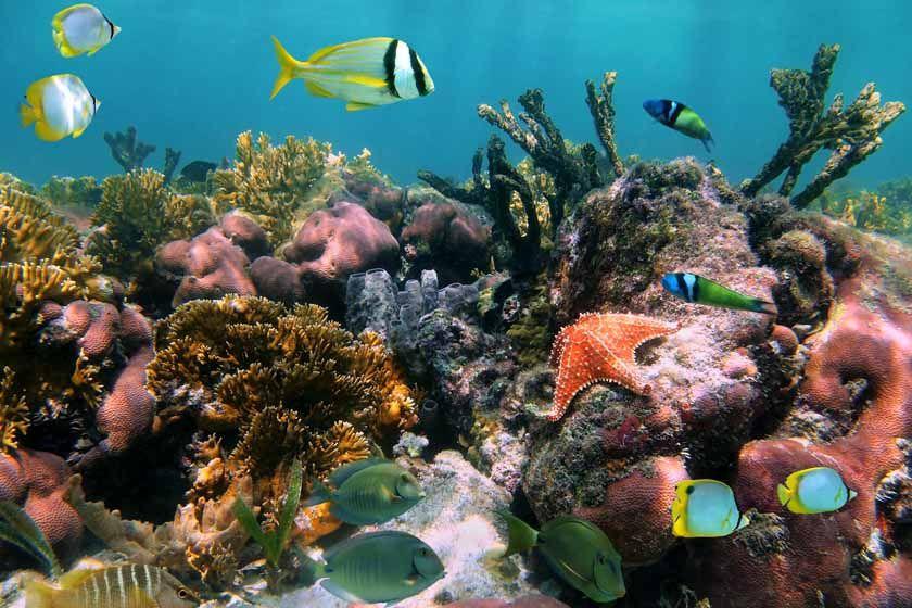 Diving in Antigua