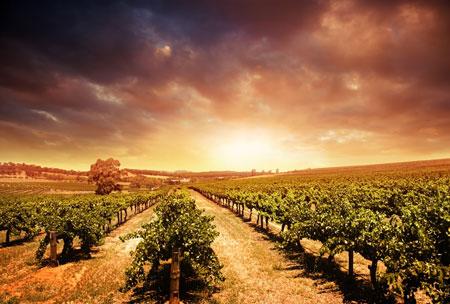 Barossa Valley, South Australia sunset
