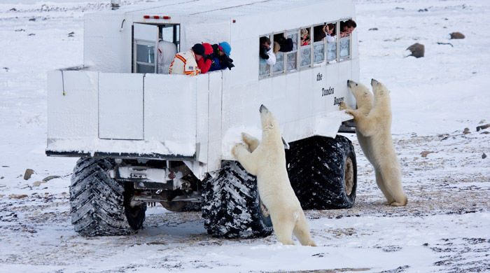 Tundra Buggy, Churchill, Canada - image courtesy of Richard Day