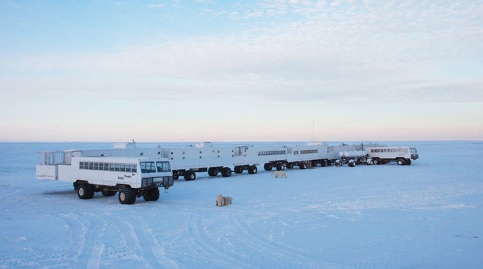 Tundra Buggies and polar bears - image courtesy of North Frontiers